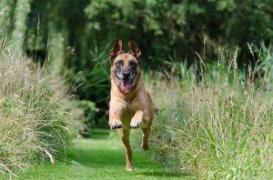 ביטוח כלבנות טיפולית